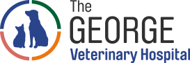 George Vet Group