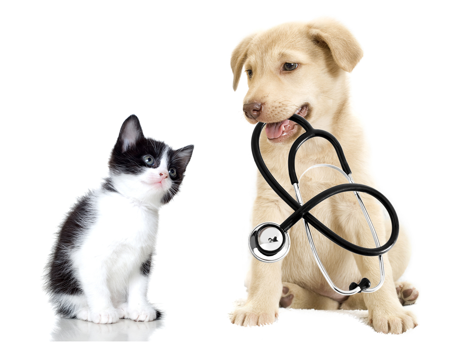Veterinary Advice from the George Veterinary Team