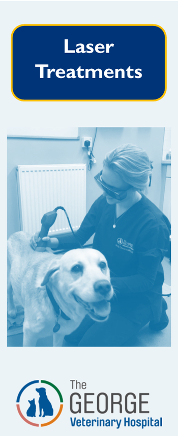 Laser traeatments at The George Vet Group